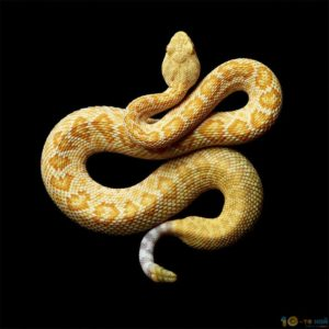 snakes_6