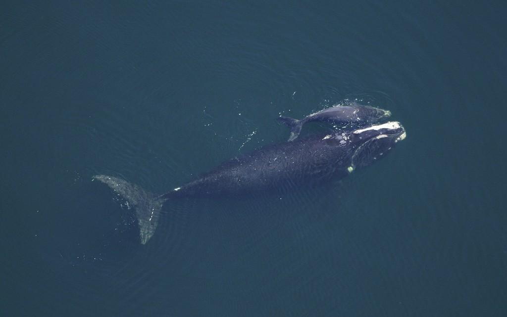 10 любопитни факта за китовете