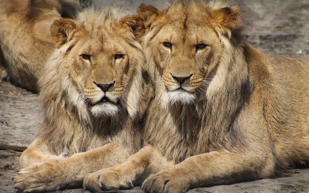 10 животински вида, които практикуват еднополов секс