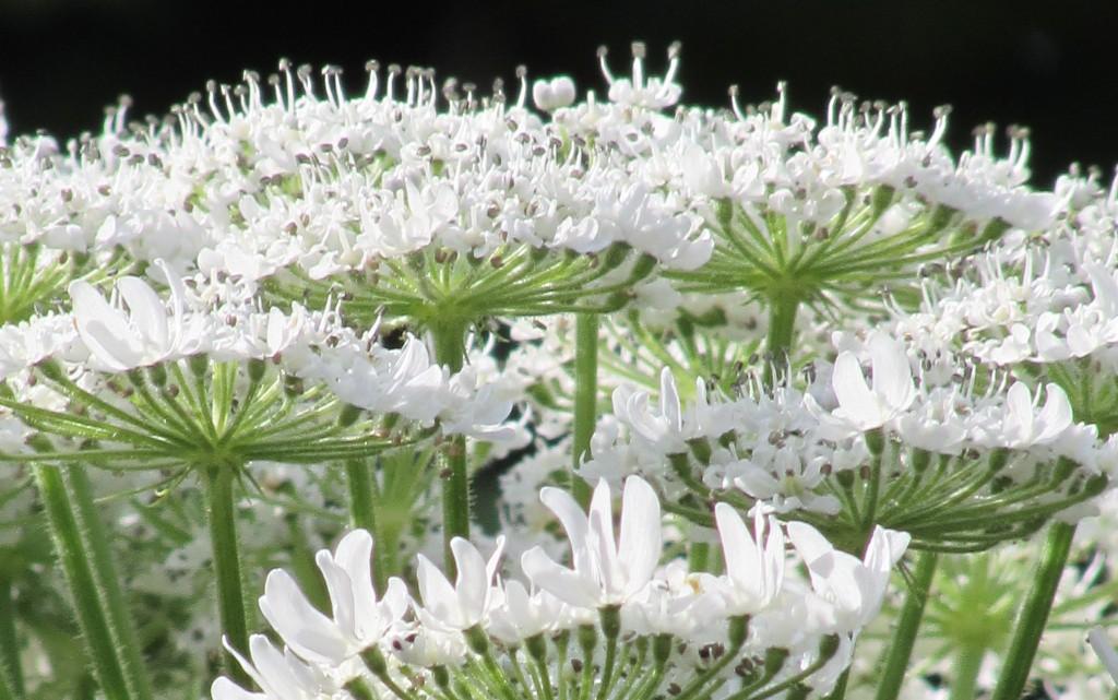 10 от най-отровните растения на света