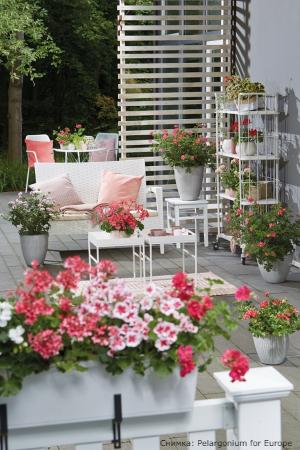 10 съвета как успешно да отгледаме мушкато вкъщи или в градината си