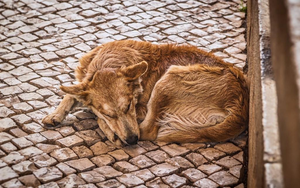 10 факта за бездомните животни