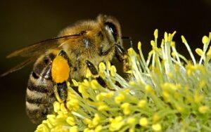 10 интересни факта за тайния живот на пчелите