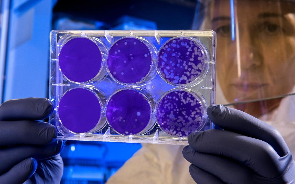10 неща, които трябва да знаем за стволовите клетки